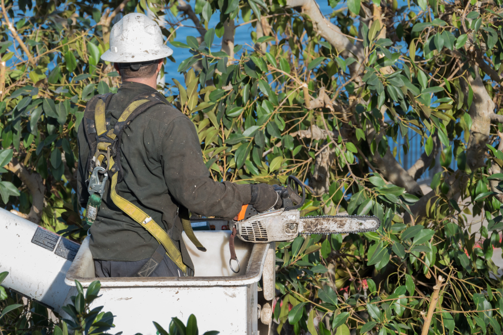 miramar tree services